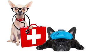 spitalizare-veterinara-suceava