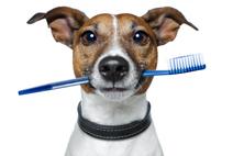 stomatologie-canina-suceava-animavet